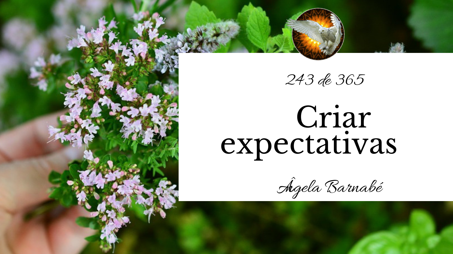 expectativas