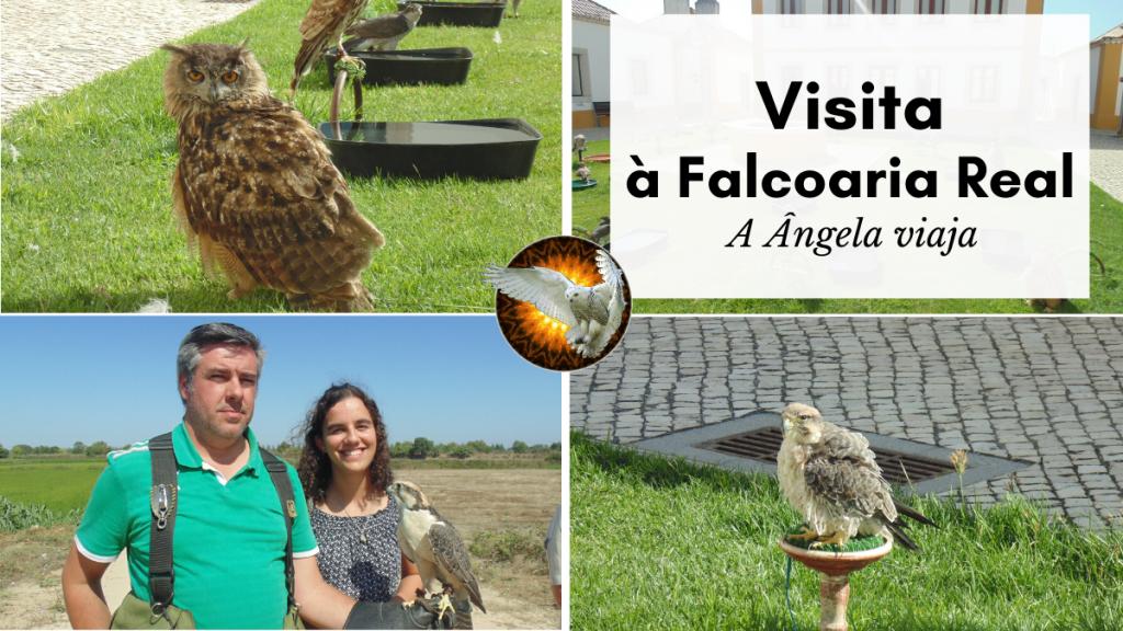 visita à falcoaria real