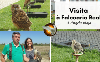 Visita à Falcoaria Real – A Ângela Viaja